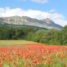 Plan d'ensemencement 2018 Prairies Fleuries Mellifères Ekoruchers  - Ruchers Hautes Alpes